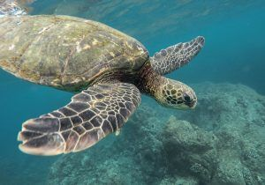Infografía: Animales en su hábitat en Riviera Nayarit