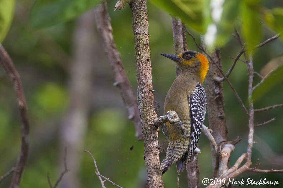 San Blas, un escenario ideal para el avistamiento de aves