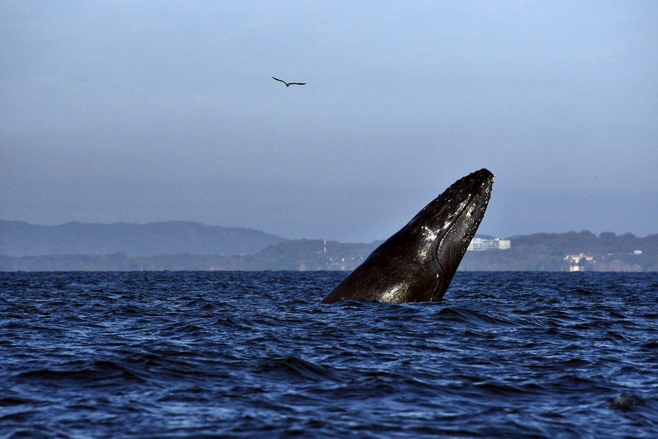 Avistamiento de ballenas: un viaje que te dejará sin aliento