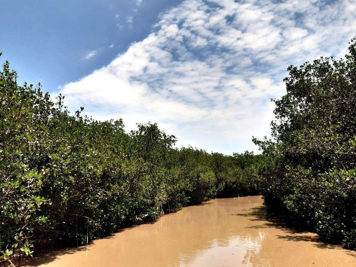 Estero El Salado, la biodiversidad de Puerto Vallarta